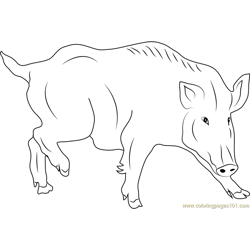 Wild Swine Free Coloring Page for Kids