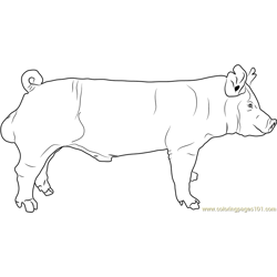 York Boar Free Coloring Page for Kids