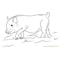 Young Wild Boar Free Coloring Page for Kids
