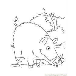 Wild-boar eating coloring page