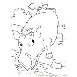Wild boar urebo coloring page