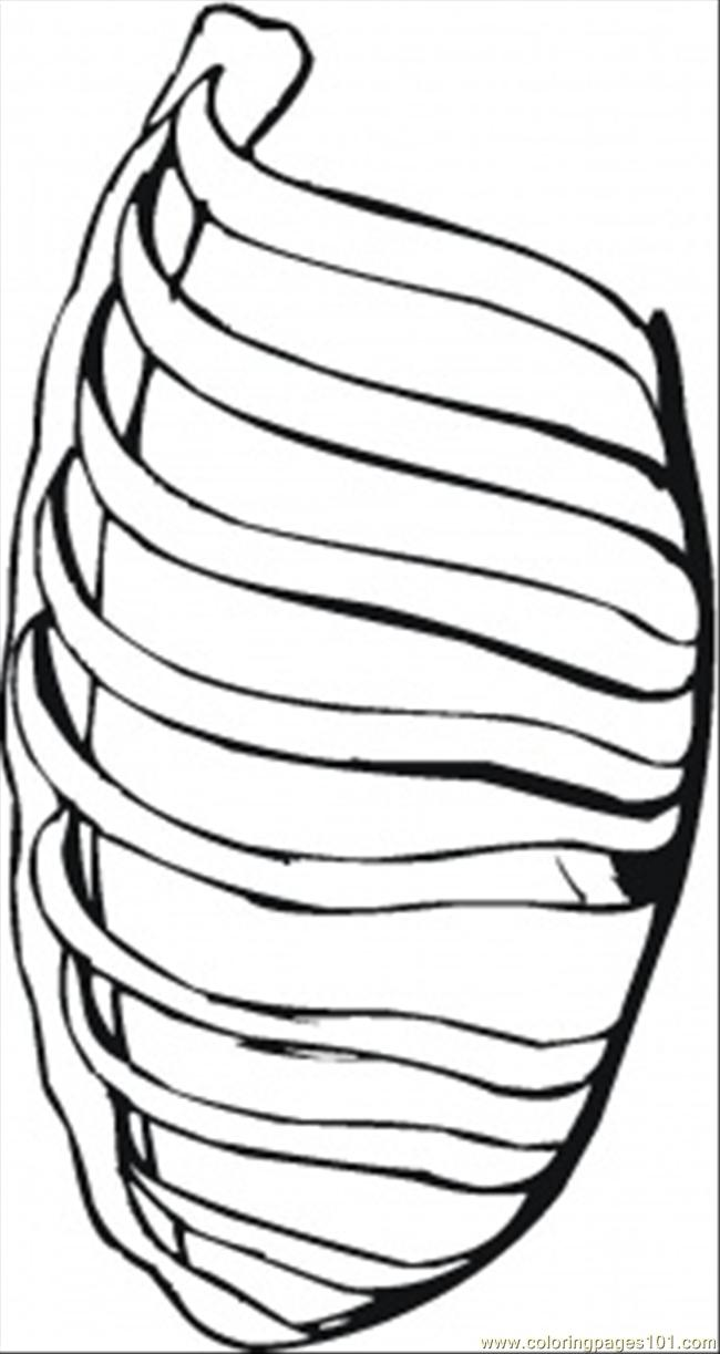 Ribs Coloring Page Free Body