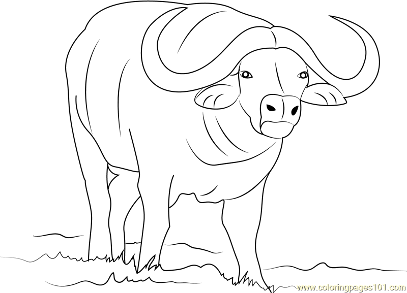 African buffalo coloring page free buffalo coloring for Bison coloring pages