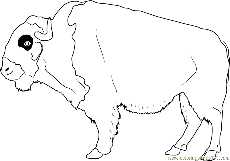 American Buffalo Coloring Page