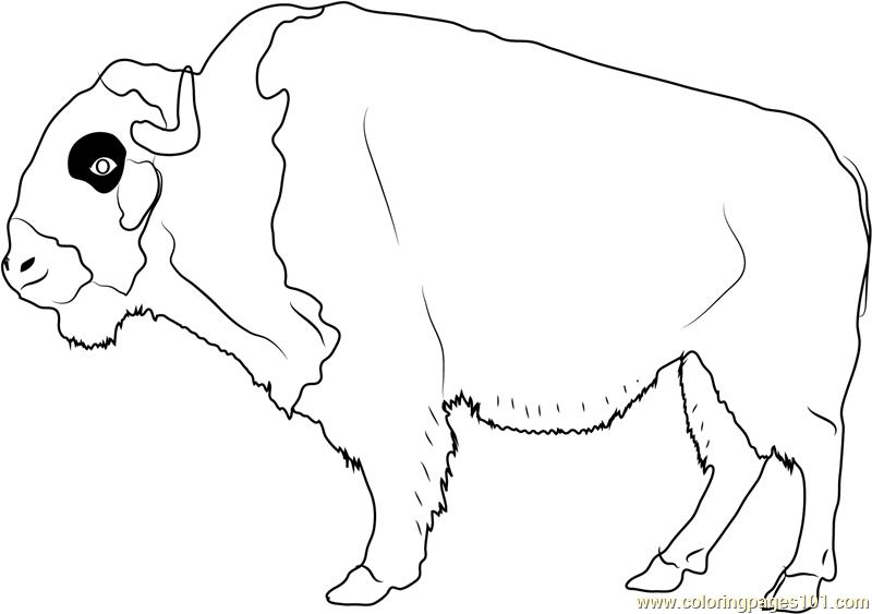 American Buffalo Coloring Page
