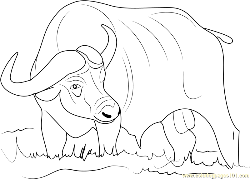 buffalo coloring pages - photo#22