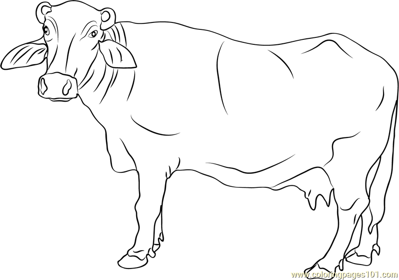 Banni Buffalo Coloring Page Free