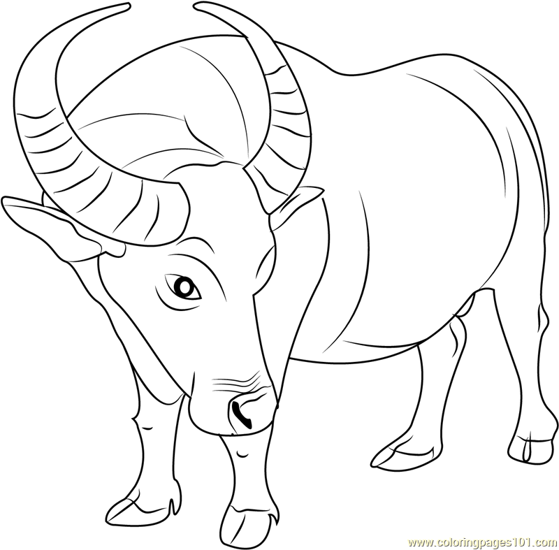 Cape buffalo coloring pages coloring pages for Bison coloring pages