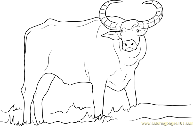 Domestic Asian Water Buffalo Coloring