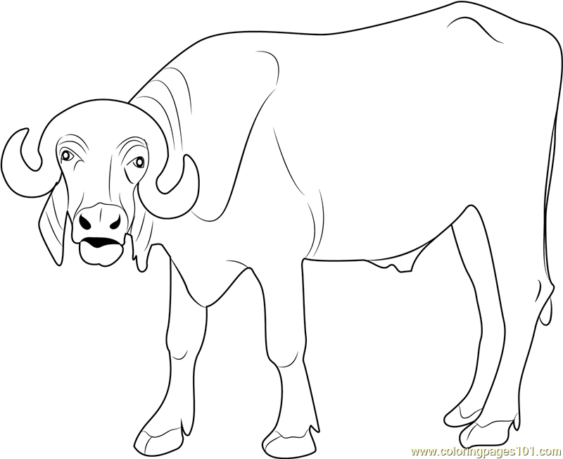 Indian Buffalo Coloring Page