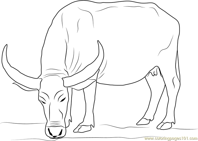 Water Buffalo Coloring Page Free