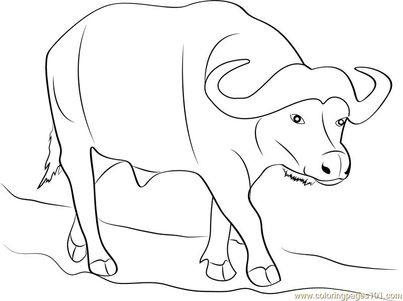 buffalo coloring pages - photo#10
