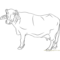 Buffalo Coloring Pages Printable