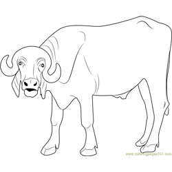 Indian Buffalo Free Coloring Page for Kids