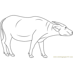 Buffalo coloring pages printable coloring pages of buffaloes for Swamp animals coloring pages