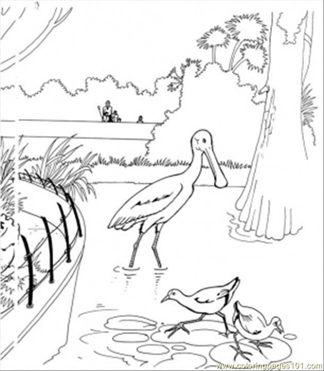 Birds In The Lake Coloring Page