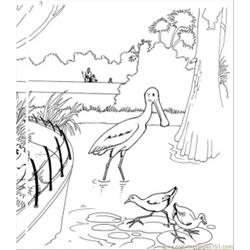 Birds In The Lake Free Coloring Page for Kids