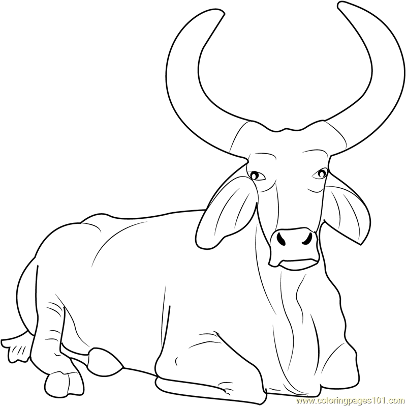 Bull Coloring Pages - Printable Coloring Pages of Bulls
