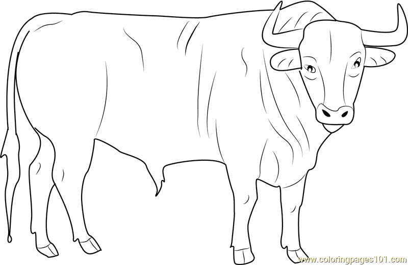 Black Bull Coloring Page Free Bull Coloring Pages
