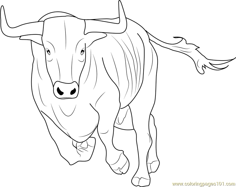 Bos Taurus Coloring Page Free Bull Coloring Pages