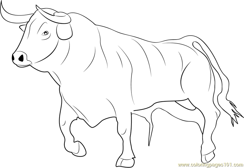 Bull Ready for Fighting Coloring Page Free Bull Coloring Pages