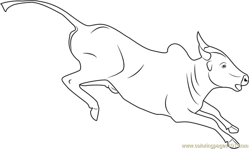 Bull Running Coloring Page