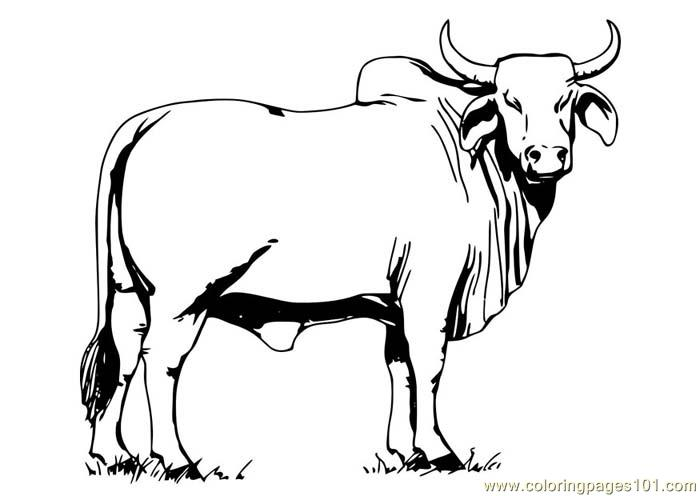 Bull Coloring Page Free Bull Coloring Pages ColoringPages101com