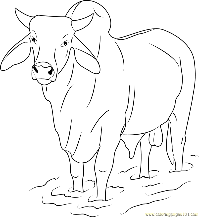 Gray Zebu Bull Coloring Page Free Bull Coloring Pages