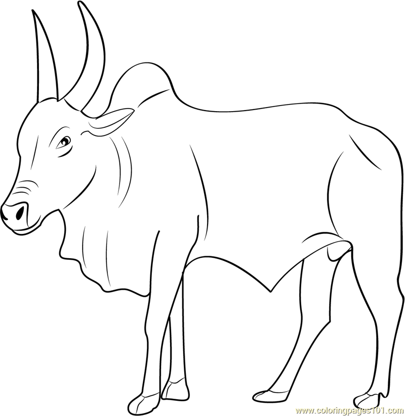 kangayam bull coloring page free bull coloring pages Benny the Bull Coloring Pages  Bull Coloring Pictures