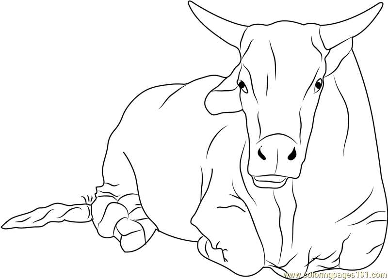 Sitting Bull Coloring Page Free Bull Coloring Pages
