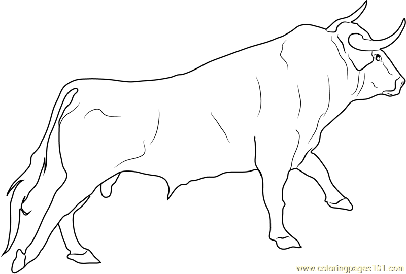 bull coloring pages - photo#11