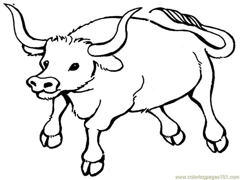 Coloring Pages Of Bulls
