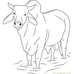 Gray Zebu Bull Free Coloring Page for Kids