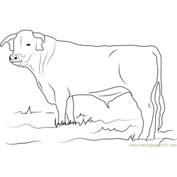 Ongole Bull Free Coloring Page for Kids