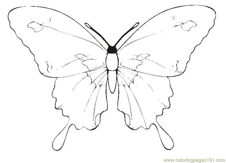 Butterfly Coloring Page Free Butterfly Coloring Pages
