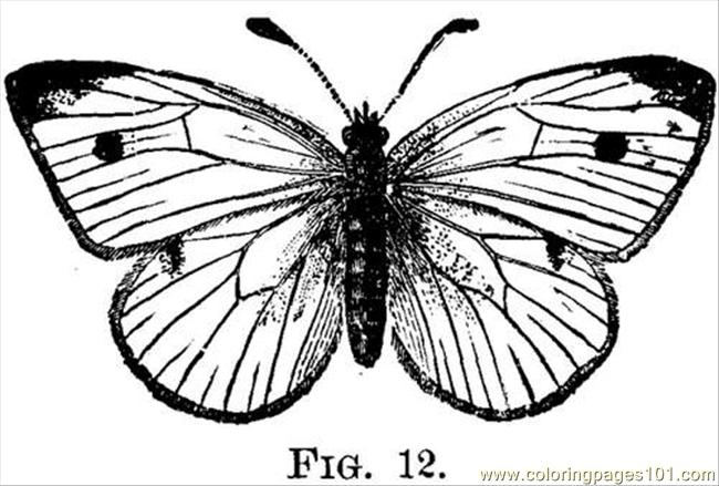 Pieris Rapae Linn 803 2 Fig12 Coloring Page
