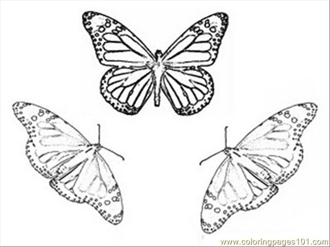 Arch Butterfly Coloring Pages Coloring Page Free