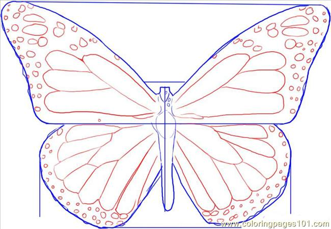 aw a monarch butterfly step 3 coloring page