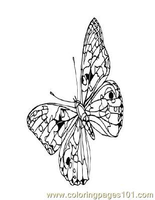 Butterflies002 Coloring Page
