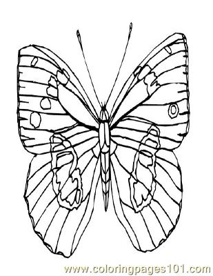Butterflies003 Coloring Page