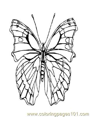 Butterflies004 Coloring Page