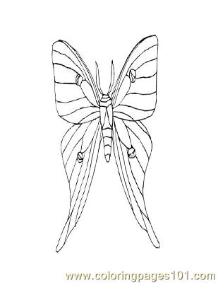 Butterflies006 Coloring Page
