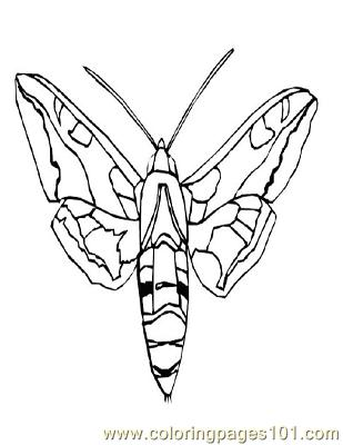 Butterflies011 Coloring Page