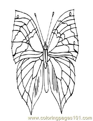 Butterflies012 Coloring Page
