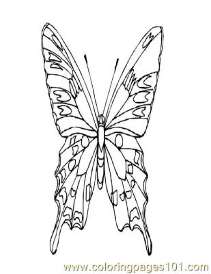 Butterflies020 Coloring Page