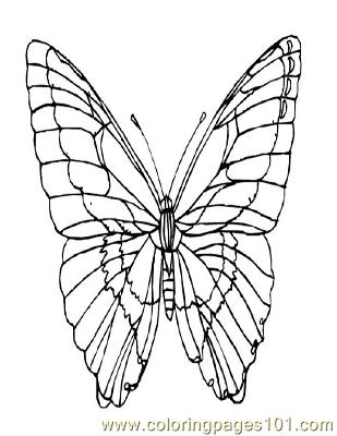 Butterflies022 Coloring Page