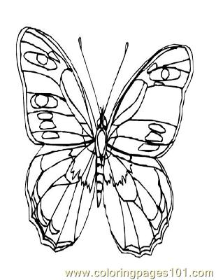 Butterflies024 Coloring Page