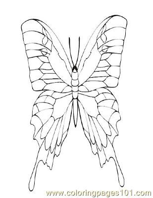 Butterflies040 Coloring Page