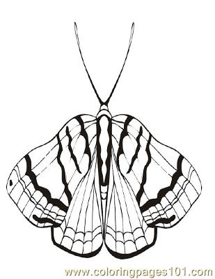Butterflies054 Coloring Page