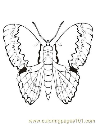 Butterflies056 Coloring Page